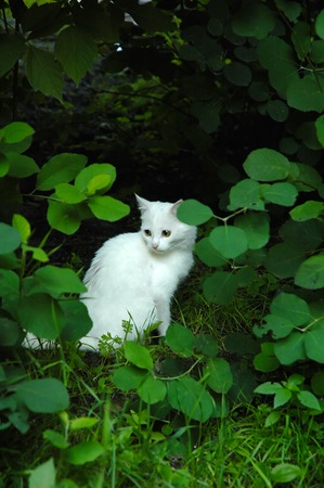 Small white ketten hides from evil boys in thick bushes