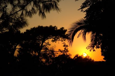 View on tropical trees lightened by back light of sunset