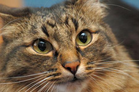 Close-up photo of cat face Stock Photo - 3428597