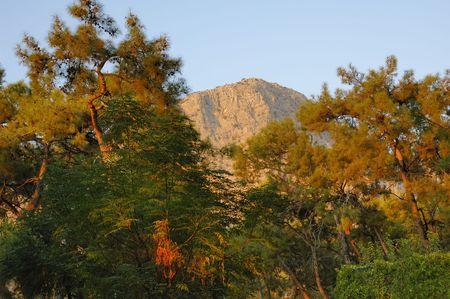 upheaval: View on Baba-Daga mountain beyond tropical plants and trees Stock Photo