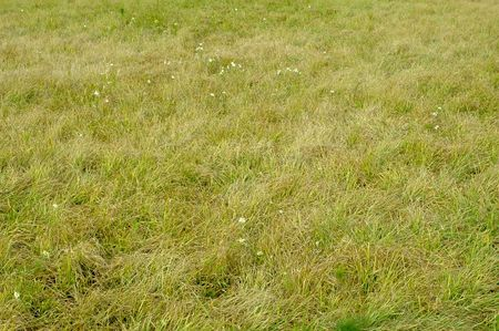 Photo of green grass meadow with camomile flowers