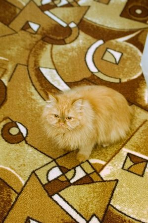 Photo of orange cat sitting on orange carpet Stock Photo