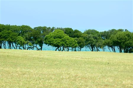 View on trees range at the sea coast from medow Stock Photo - 3428530