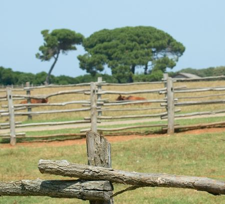 Photo of cattle paddock fence details with trees and resting cows at the background photo