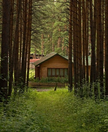 View on a small wooden house through the cutting in the pine tree forest