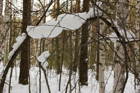 View on snow-covered thicket in the Russian forest