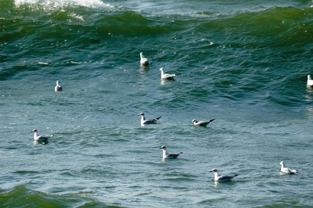 Photo of sea gulls swimming in the waves of the Baltic sea Stock Photo