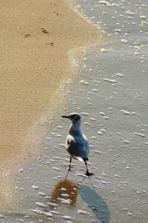 Photo of sea gull walking at the sand coast of the Baltic sea photo