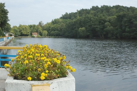 Photo of flowerbed full of yellow flowers with a small lake on background Stock Photo