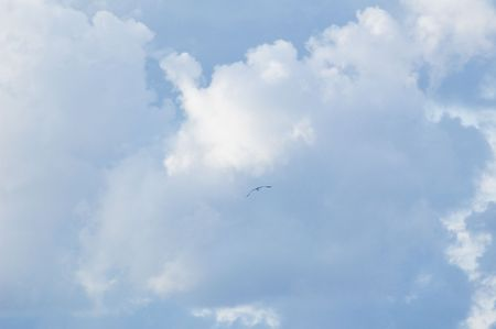 Photo of sea gull flying far in the clouds