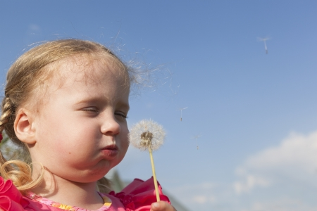puffed cheeks: Little girl blowing a dandelion Stock Photo