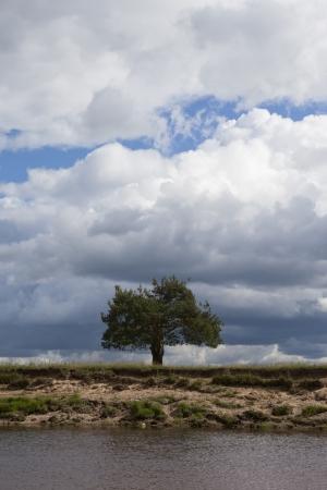 lone pine: Un �rbol de pino solitario por el r�o Foto de archivo