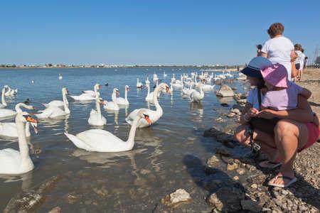 Evpatoria, Crimea, Russia - July 23, 2020: Tourists admire graceful swans on the Sasyk-Sivash lake in the city of Evpatoria, Crimea