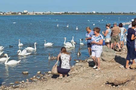 Evpatoria, Crimea, Russia - July 23, 2020: Tourists feed swans on the Sasyk-Sivash lake in the city of Evpatoria, Crimea