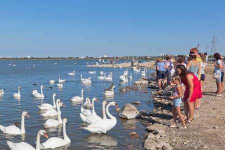 Evpatoria, Crimea, Russia - July 23, 2020: People feed swans on the Sasyk-Sivash lake in the city of Evpatoria, Crimea
