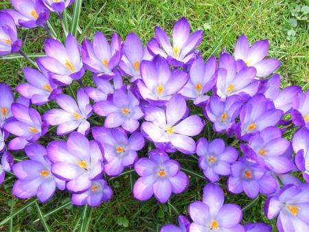 꽃 자주색