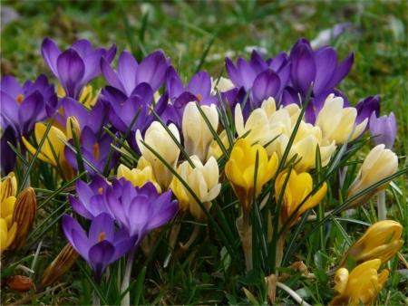 노란색과 보라색 꽃