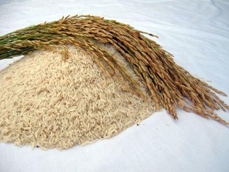 Basmati Rice Stalk Series with Rice 7