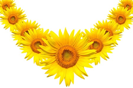 Necklace of Sunflowers for Someone Special  Stock Photo - 3961135