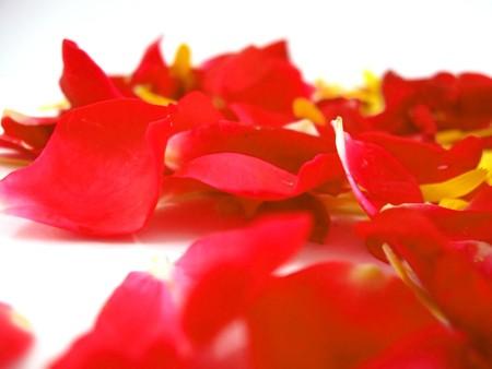 Rose Petals Closeup Background   Stock Photo - 4177850