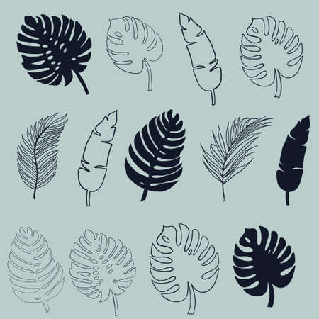 Tropical leaves of palm, monstera. Set of black silhouettes of tree leaves. Vector illustration 向量圖像