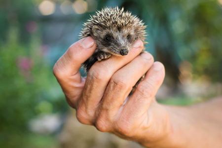 hedgehog close up photo