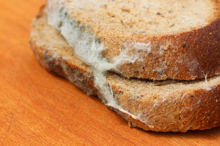 repulsive: The old black mold on the bread. Spoiled food. Mold on food.