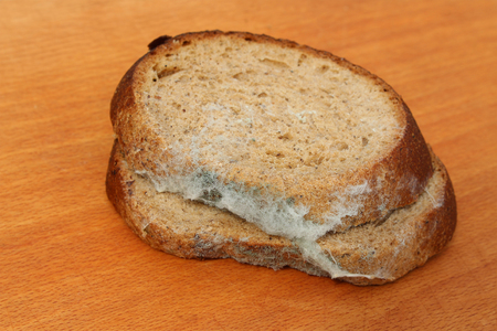 molds: The old black mold on the bread. Spoiled food. Mold on food.
