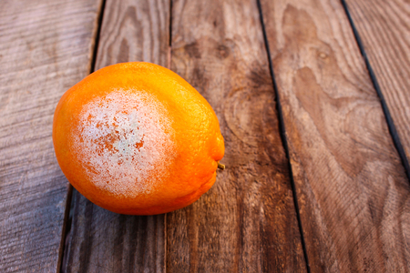 repulsive: A rotten orange on wooden background. Spoiled food. Mold on food. Toned image. Stock Photo