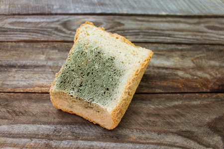 Old white mold on bread. Spoiled food. Mold on food.