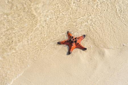 Pequeña estrella de mar naranja sobre la arena blanca húmeda