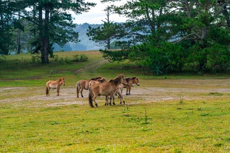 Group of wild horses on the green pasture