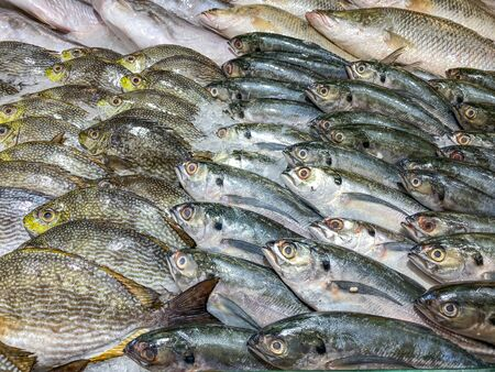 Assortment of fresh fish frozen on ice at seafood market