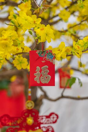 Closeup photo of lucky money hanging on apricot blossom tree Stockfoto