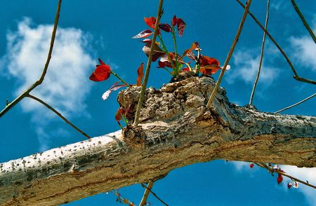 vivre: Immature sprouts of an old tree are uprushing to the sky, to New Life, joie de vivre