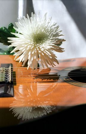 White chrysanthemum and guitar