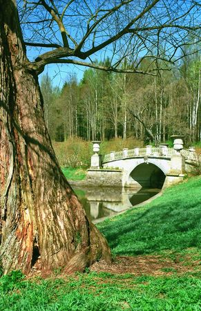 Old tree and ancient brige in the beginning of Spring Stock Photo