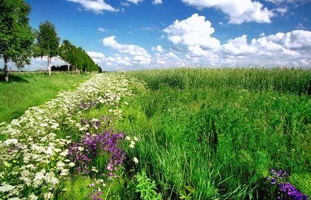 Beau terrain avec des fleurs sauvages et pittoresques de nuages Banque d'images