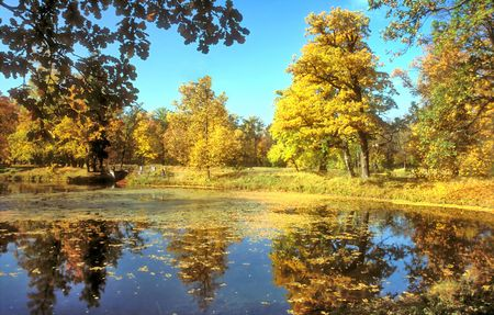 Autumn pond in the park with reflection of trees Stock Photo