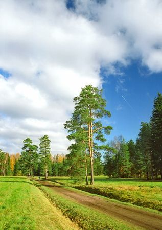 Way to the autumn park with pine trees vertical