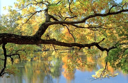 Picturesque tree branch over water with reflections Stock Photo