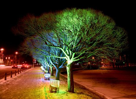 Christmas illumination of trees in the street