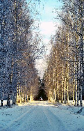 Birche all�e du parc en hiver, neige Banque d'images