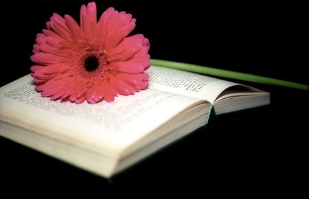Pink gerbera on the open book Stock Photo