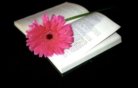 prose: Pink flower and book on black background Stock Photo