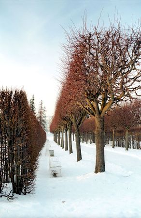 Red colors of winter trees in the park Stock Photo - 4262646