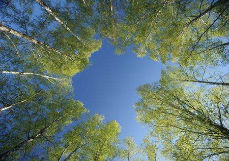 Cercle de bouleaux couronnes printemps ciel bleu