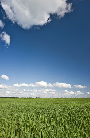 livestock sector: Green grass and blue sky with clouds background Stock Photo