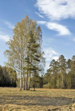 Les arbres sur woodside temps sous le soleil de printemps