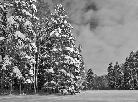 Winter park avec des arbres et le champ de neige monochrome Banque d'images